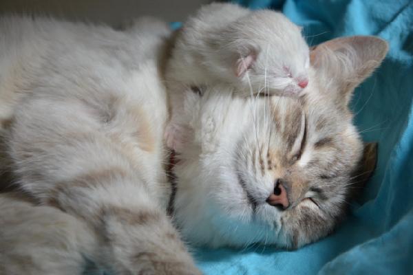 Расстройство сна, такое как бессонница, является одним из самых разрушительных условий отдыха и сна