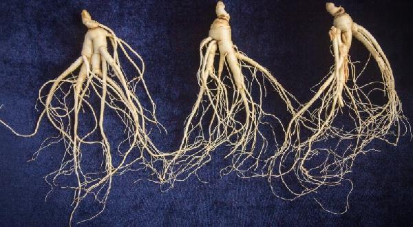 Травы для мозга - женьшень