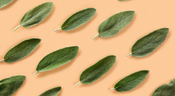 Травы для мозга - шалфей