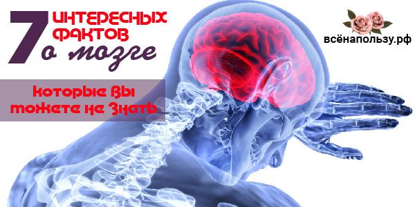 факты о мозге интересные головном человека работы