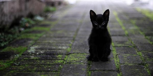 черный цвет характеристика