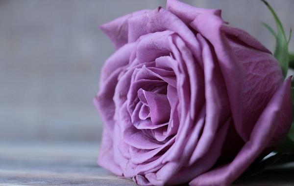 фиолетовый цвет характеристика
