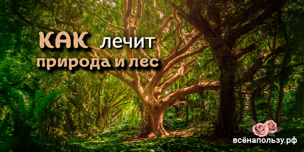 лечит природа лес