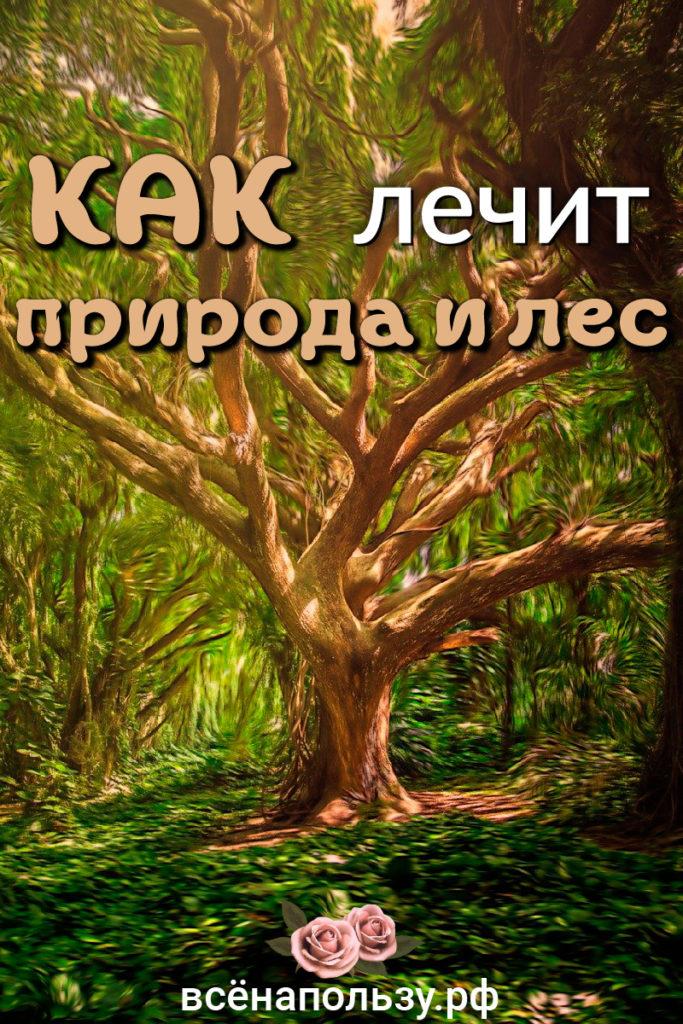 природа лес лечит