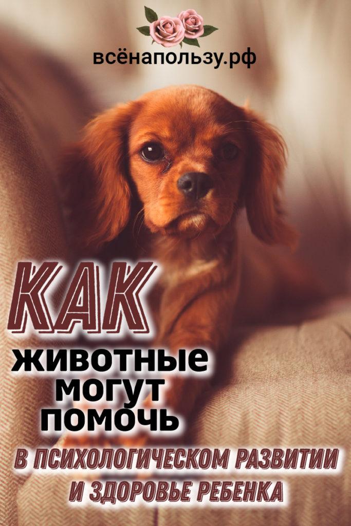 домашние животные для ребенка