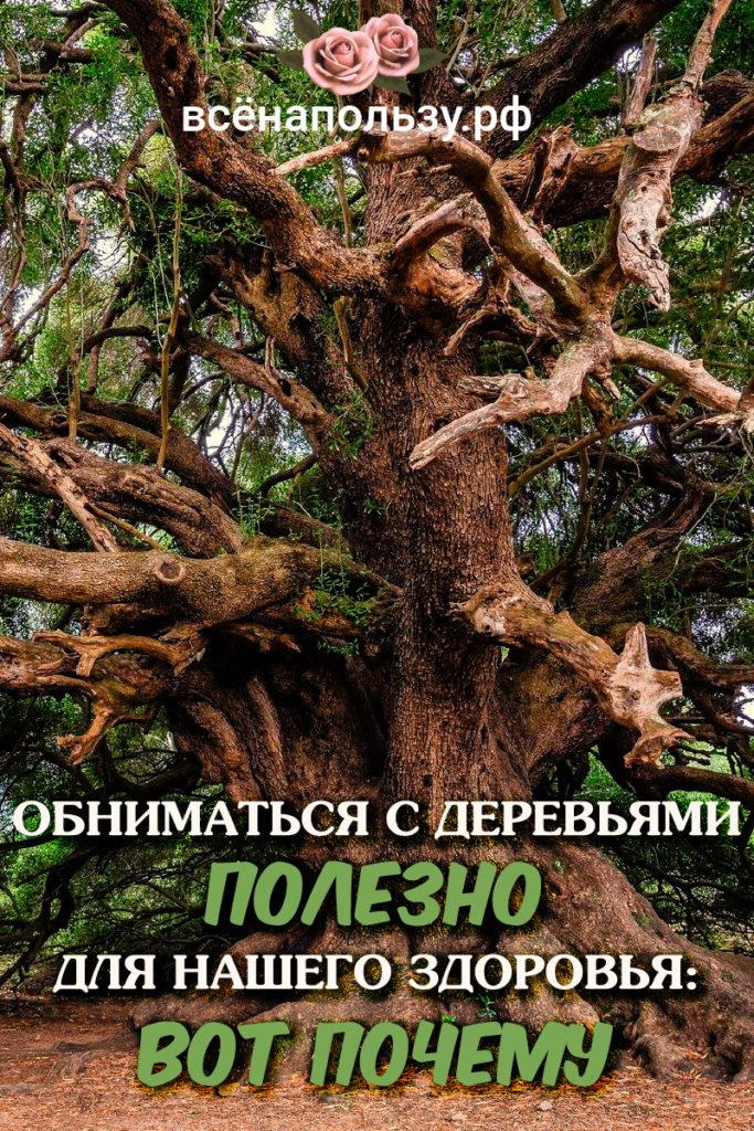 Обнимать деревья